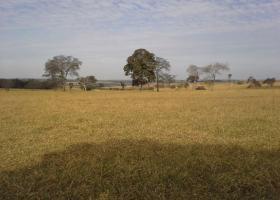 Rural com 0 , Santa Fé do Sul