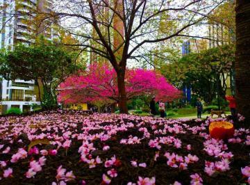 13º andar Frente Praça do Japão - Ed. Natori  Face Norte - 4 dorm 2 suítes 194m²