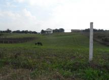 Terreno à venda em Guajuvira