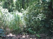 Terreno à venda em Alpes de Caieiras