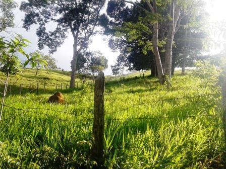 Fazenda Cacau e gado 190 tarefas  (Vale do Jequiriça)