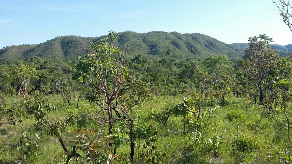 Apenas 15 mil o Alqueire - Fazenda em Tocantins