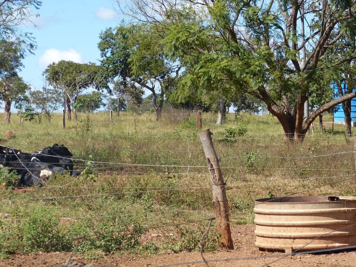 Fazenda 101 hectares