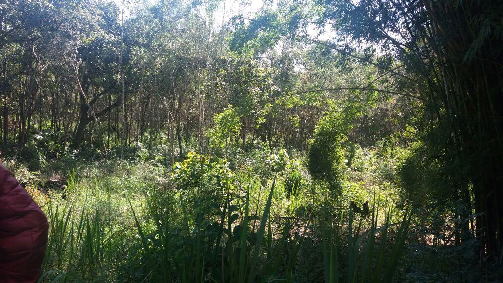 Lindos terrenos em Biritiba Mirim
