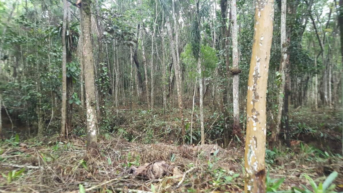 Maravilhosos terenos em Biritiba Mirim