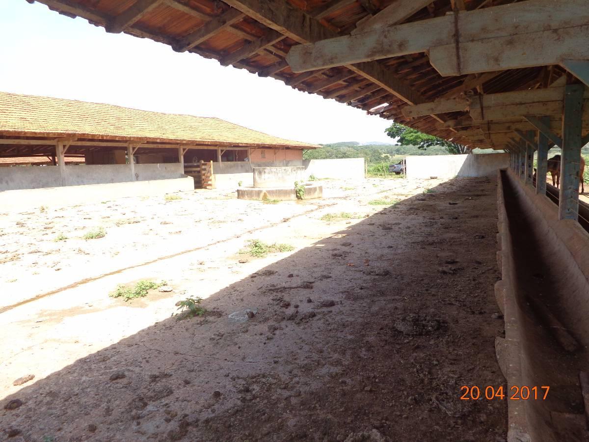 145 hectares em Curralinho - Para confinamento !