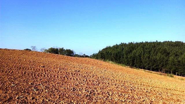 Rural de 0 quartos, São José dos Pinhais