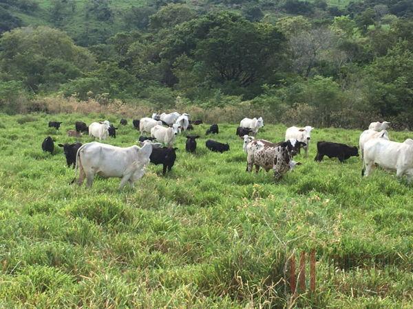 Rural de 0 quartos, Jataizinho