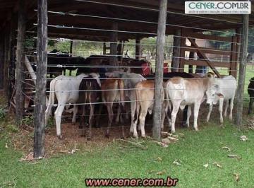 Rural de 0 quartos, João Pinheiro