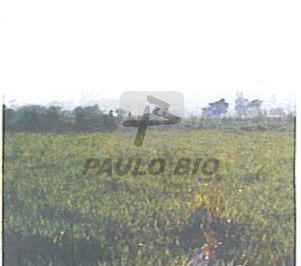 2518_ipaulobio2518_113250.jpg