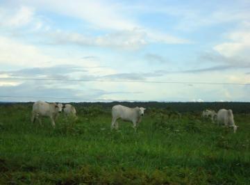 Rural de 0 quartos, Vila Rica