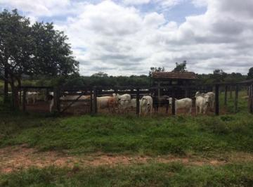 Rural de 3 quartos, Ipameri