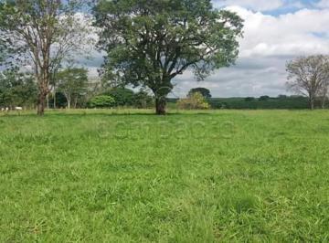 neves-paulista-rural-sitio-rural-16-10-2019_15-53-51-0.jpg