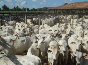 Rural de 0 quartos, Aruanã
