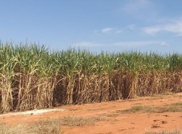 Rural , Mineiros