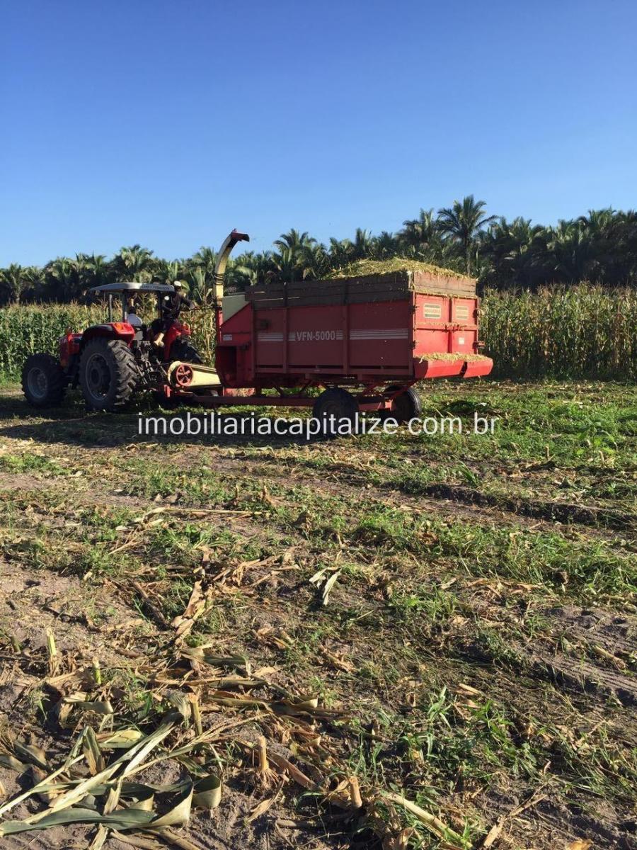 fazenda 120 hectares, venda, povoado campestre norte em teresina - pi