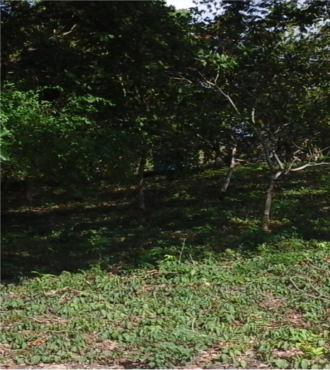 terreno 24x30, para venda no bairro gurupi em teresina - pi