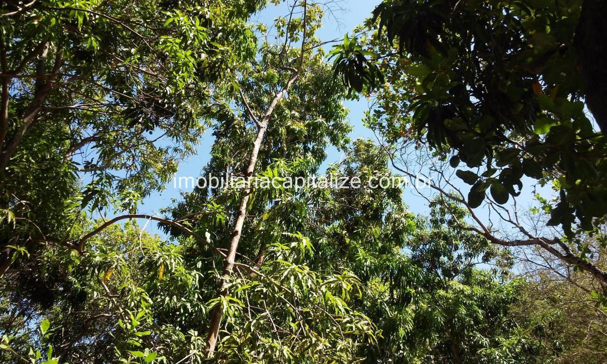 terreno, 314 hectares, localidade bacuri, município de são pedro do piauí