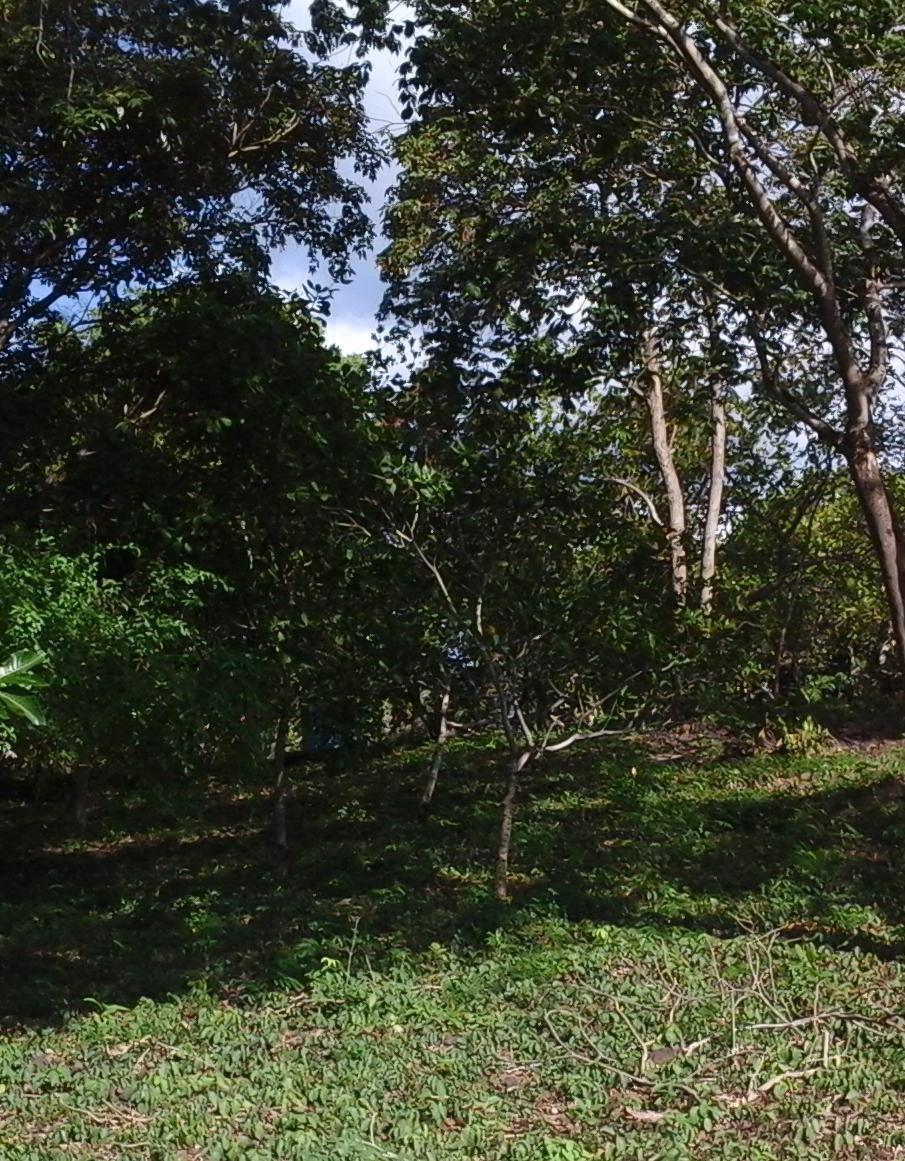 terreno rural para venda bairro zona rural rio grande do piauí