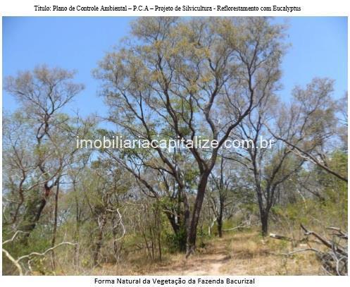 fazenda 1289 hectares, venda, são francisco do maranhão - ma
