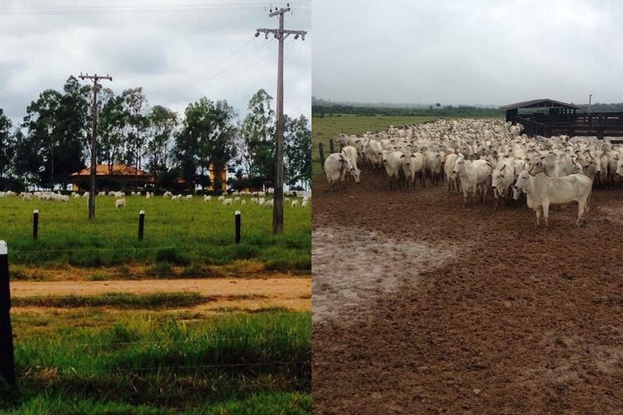 fazenda com 3318 hectares pecuária e agricultura com 80 aberta em rondônia