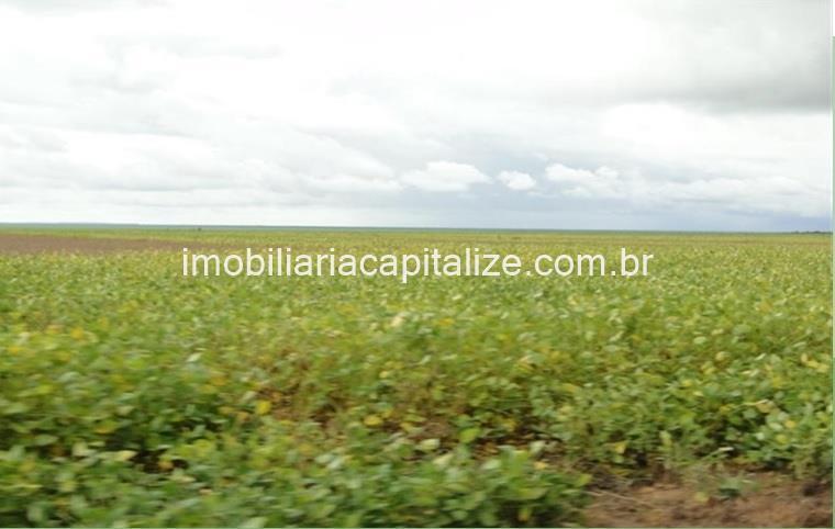 fazenda, 20 mil hectares, no médio parnaiba - pi