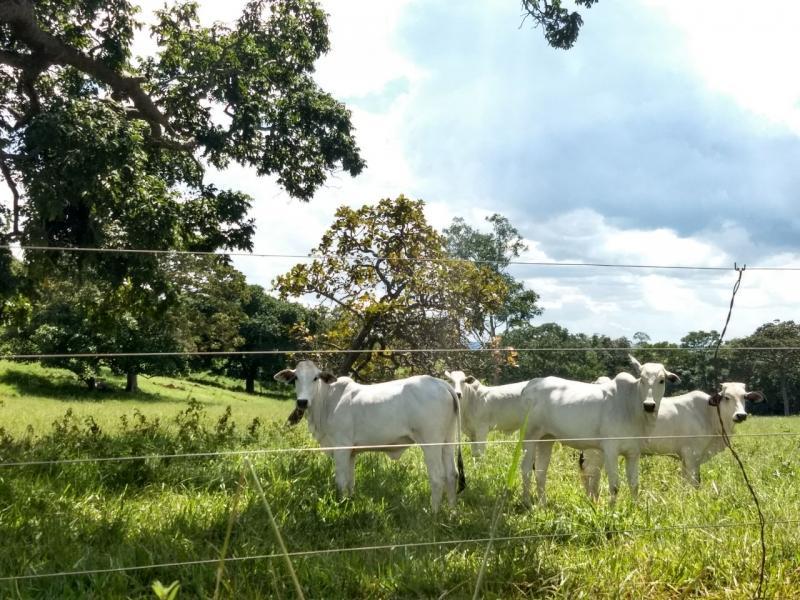 Rural de 0 quartos, Bela Vista de Goiás