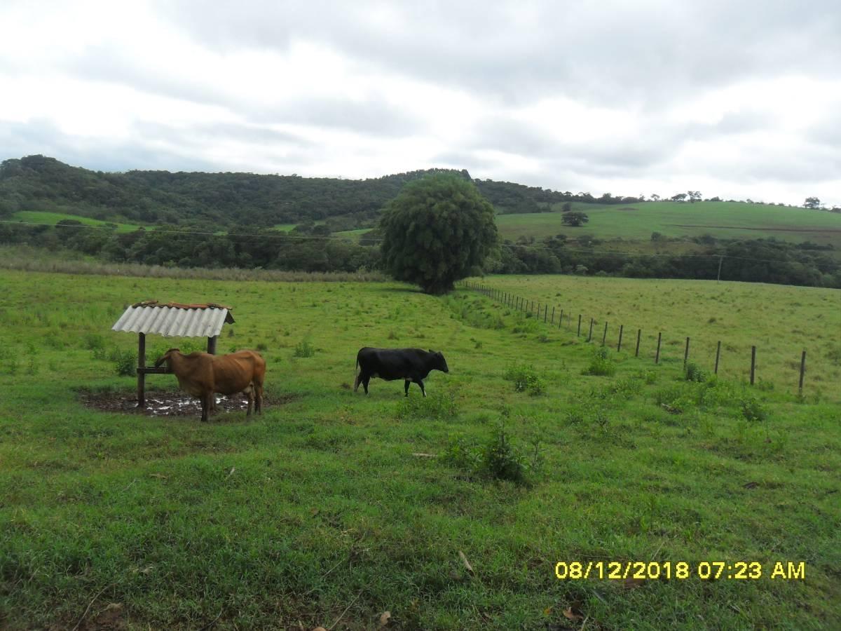 excelente e lindo terreno de 13,5 ha totalmente em várzea e ótima localização