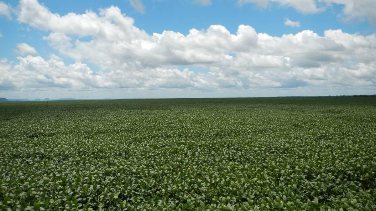 fazenda de grãos em são francisco do maranhão