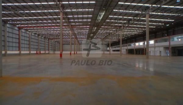 3107_ipaulobio3107_449271.jpg